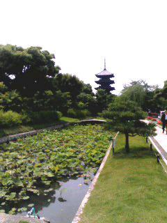 080601_東寺~001_b.jpg